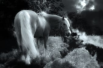 Photo of beige horse near garden during night time
