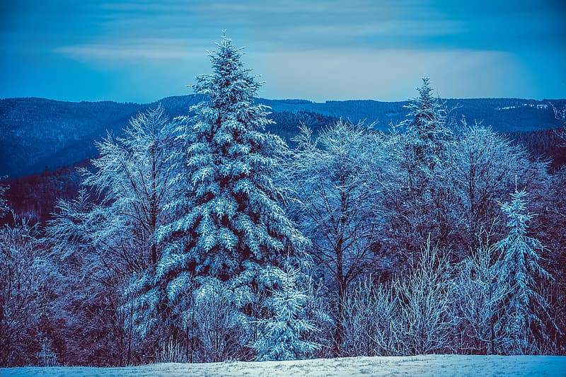 Snow covered trees under cloudy sky during daytime