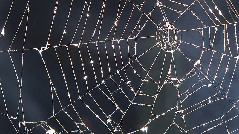 Closeup photography of drops of water on spider web at daytime
