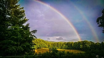 Landscape photo of trees with rainbow