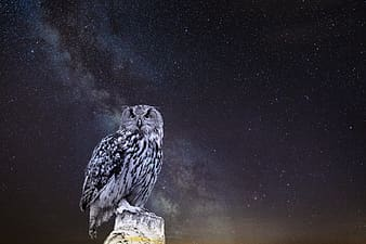 Gray owl perched on branch at nighttime