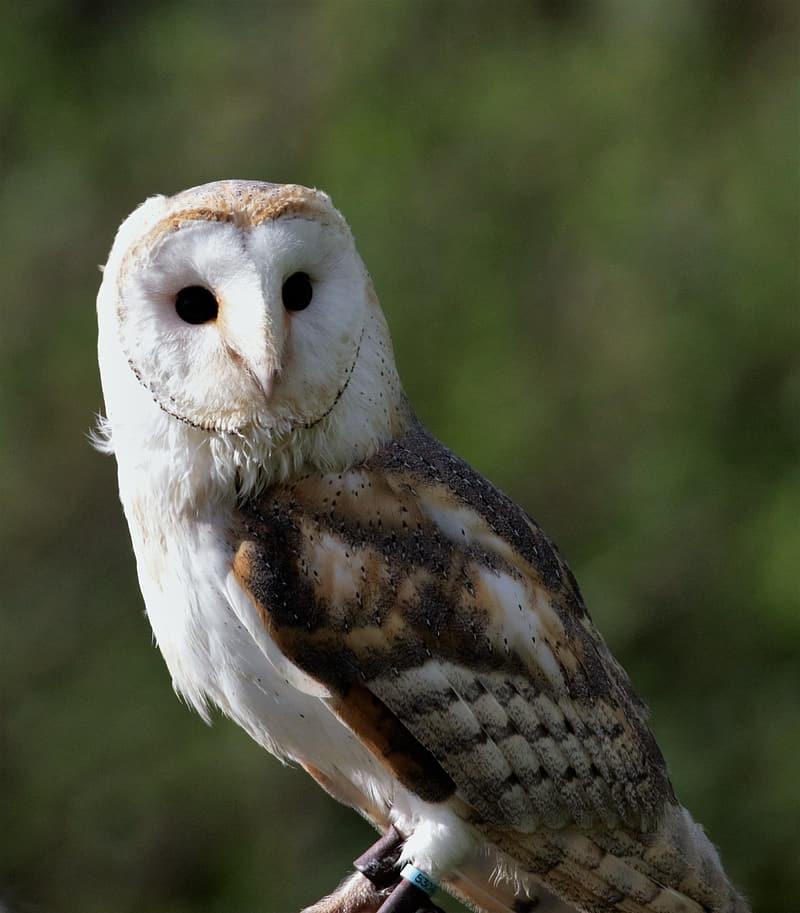 Close-up photography of white and black owl