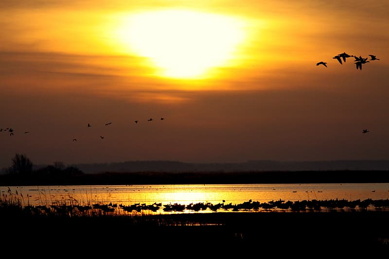 Flock of birds silhouette photography