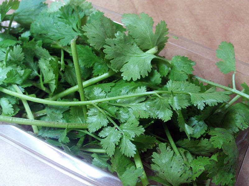 Green parsley in clear plastic container