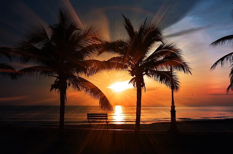 Silhouette photography of palm trees on seashore