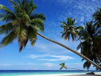 Landscape photo of a coconut trees on the seashore