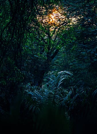 Green plants during yellow sunset