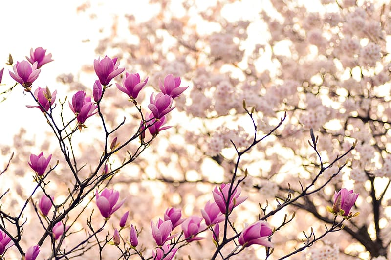 Shallow focus of pink and white flowers