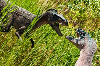 Two fighting dinosaurs
