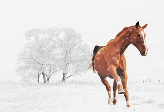 Galloping horse on snow illustration