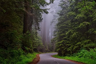 Gray paved road surrounded by green leaf trees