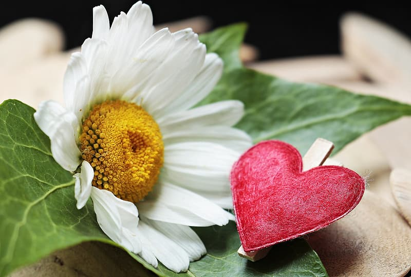 Closeup photo of red heart ornament near white flower