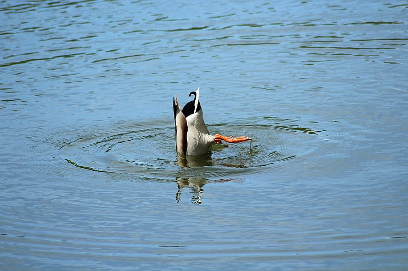 Duck on body of water