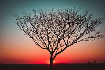 Leafless tree on the beach during sunset