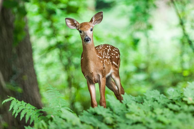 Brown deer near green leaf plants in selective-focus photography