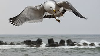 Seagull flying near rock formation at daytime