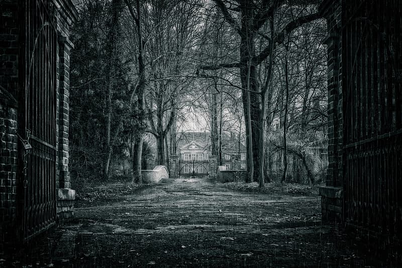 Grayscale photo of trees and house