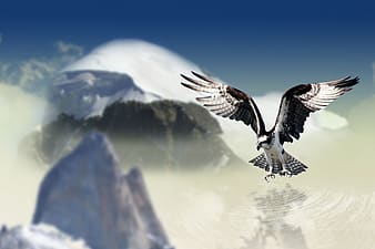 Black and white eagle with mountain view