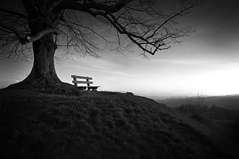 Grayscale photography of wooden bench beside tree