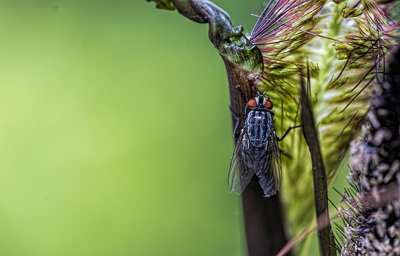 Black and green insect on green stem