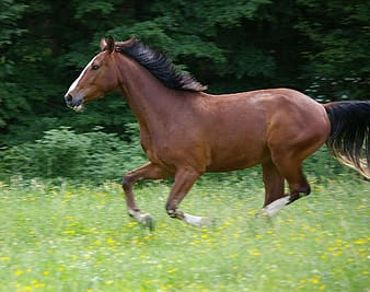 Brown horse running on yellow petaled flower field during daytime