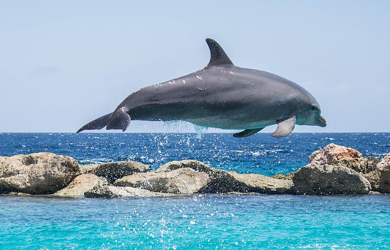 Jumping gray dolphin on body of water at daytime