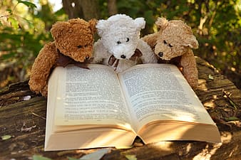 Three brown and white bear plush toys with book on brown wooden table