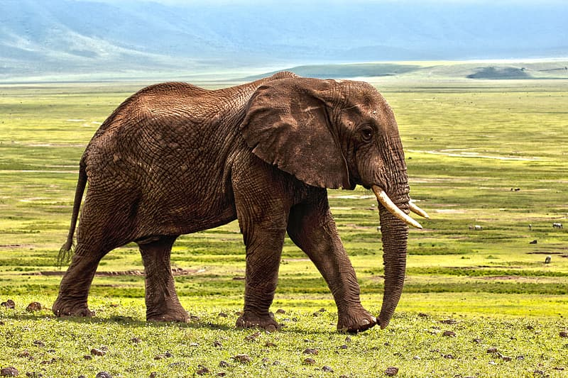 Photo of brown elephant on grass field during daylight