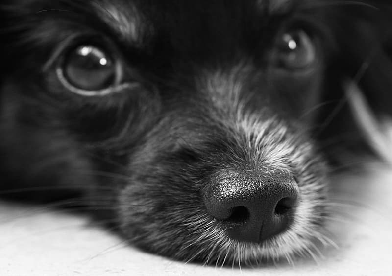 Short-coated puppy on focus photo