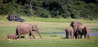 Group of elephants on grass field