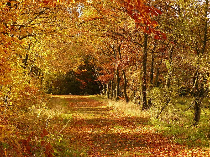 Pathway surrounded by brown leafed trees during daytime