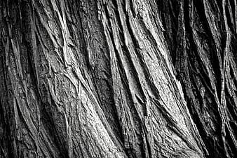 Closeup photo of gray tree trunk