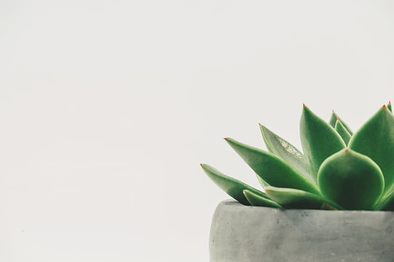 Photography of green plant on gray pot
