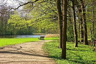 Empty road with bench chair facing body of water during daytime