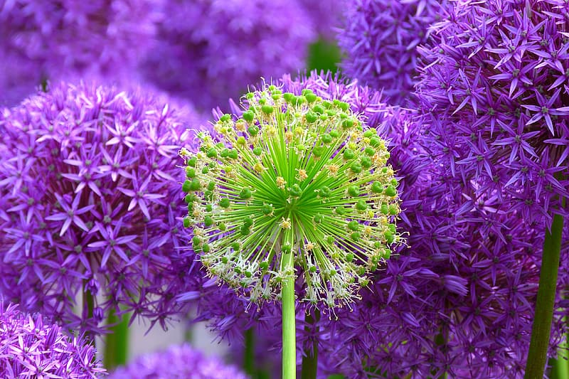 Purple and green flowers photo