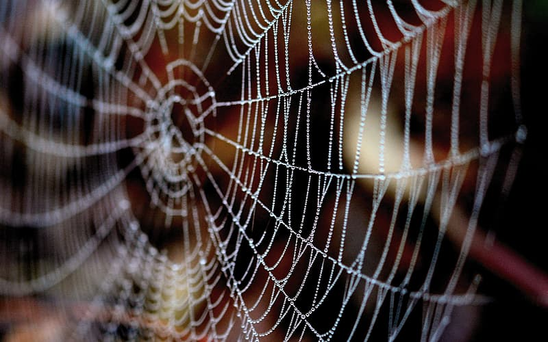 Spider web in close up photography