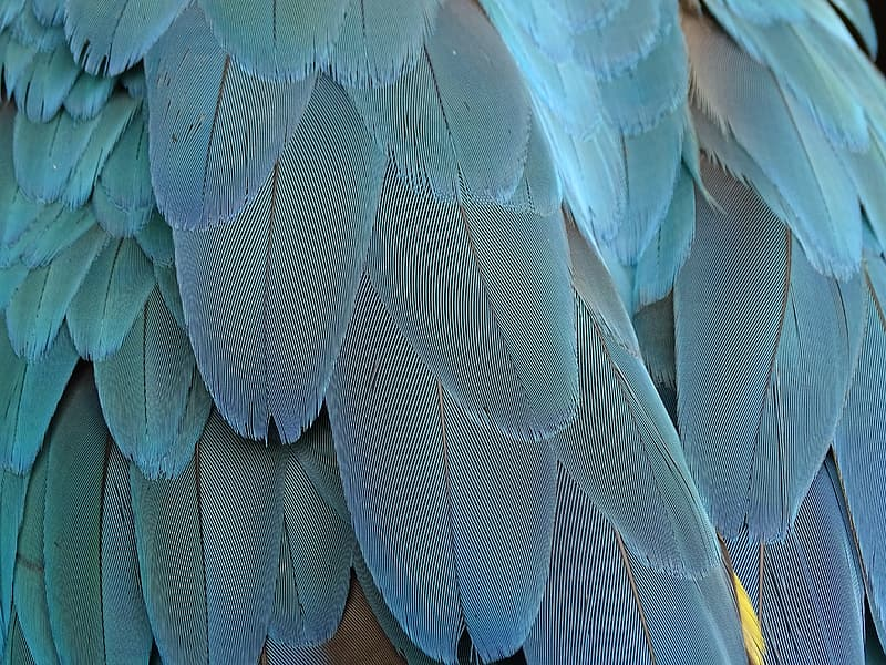 Close up photo of feather