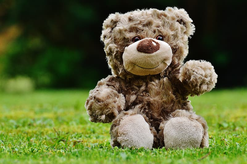 Brown bear plush toy on the green grass field