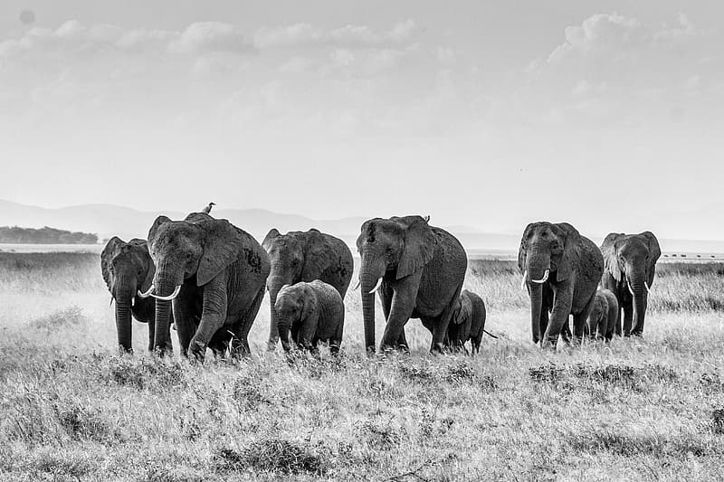 Group of elephant running during daytime