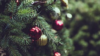 Christmas tree with red and gold bauble