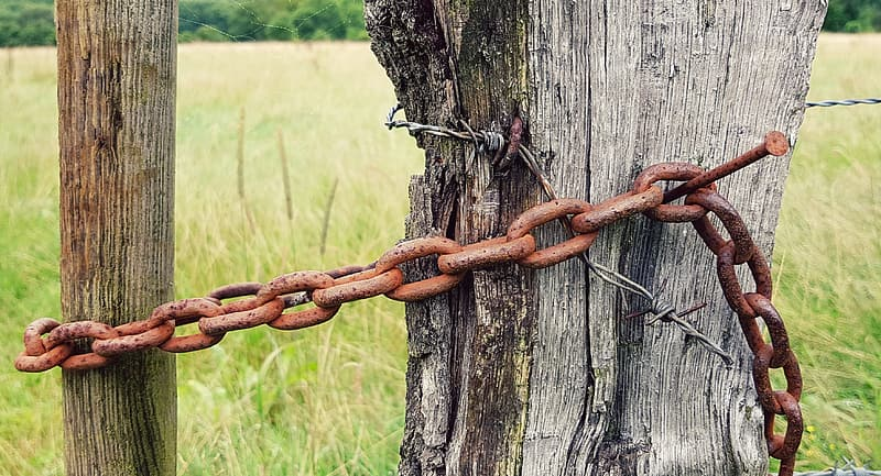 Rusted brown chain on tree