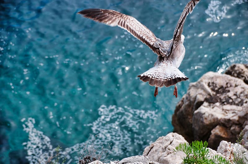 White and gray bird flying over the body of water during daytime