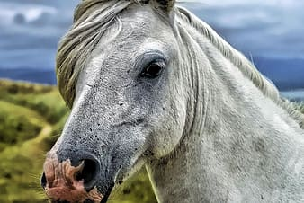 Shallow focus photography of gray horse