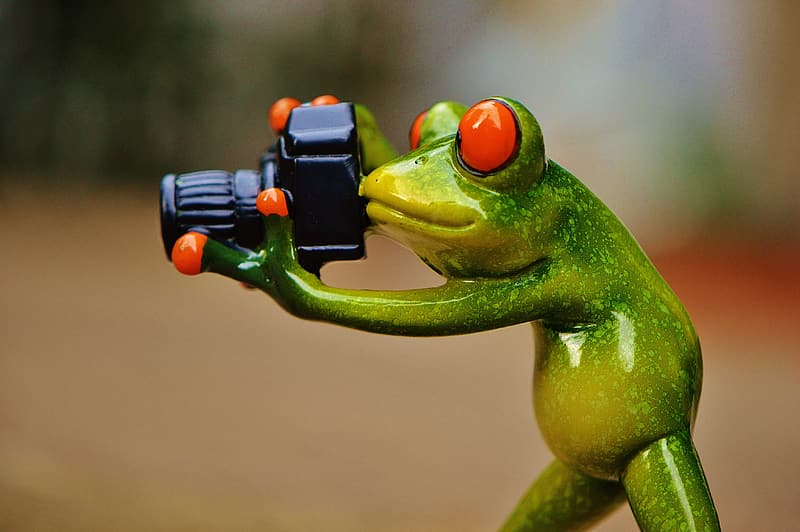 Selective focus photograph of green poisonous frog holding DSLR camera