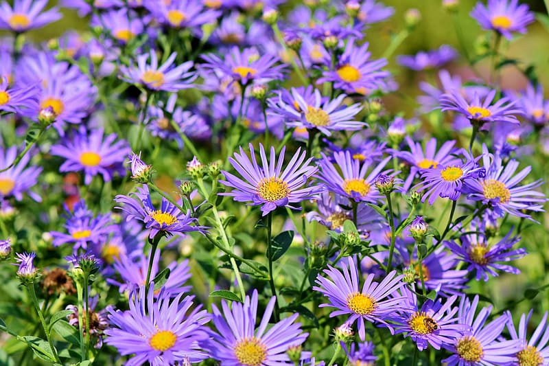 Purple and white flowers during daytime