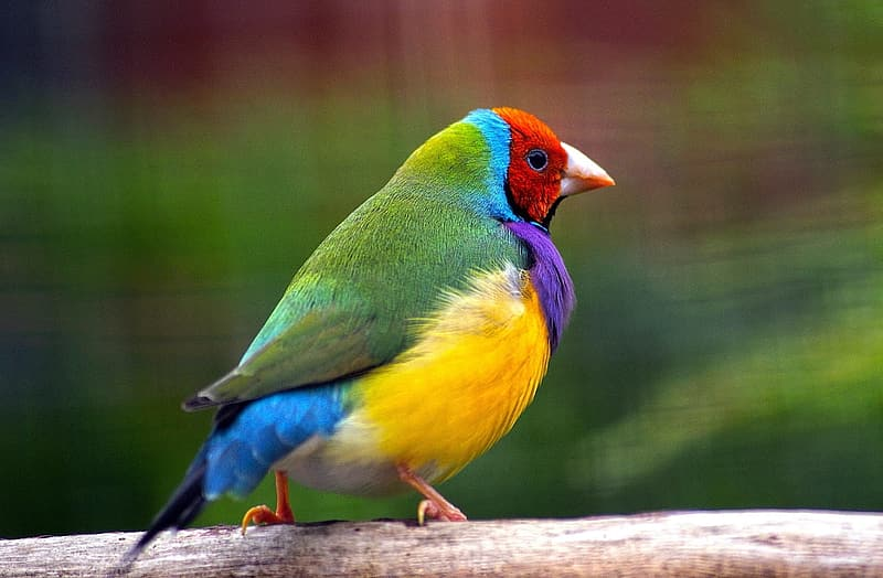 Close-up photography of green, yellow, red, and purple bird
