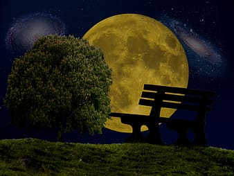 Silhouette of bench near tree during nighttime