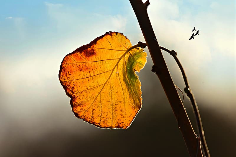 Brown and yellow leaf on brown branch
