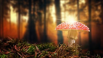 Mushroom in forest during sunset