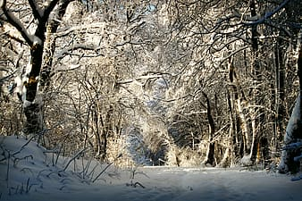 Photo of bare trees covered by snow